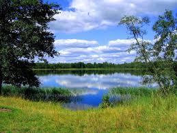 Как написать диссертацию за месяц Как измерить ширину реки · Все об экологии как науке