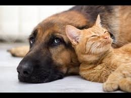 dog and cat love each other. Brilliant Other Wonderful Cats And Dogs Loving Each Other With Dog And Cat Love Each Other YouTube