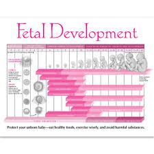 Newborn Development Chart Week By Week Growing A Baby Weekly Pregnancy Chart Childbirth Graphics