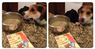 Innovative Art The Honest Kitchen Reviews The Honest Kitchen Dog Food Review  Who Said Nothing In