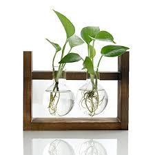 halova terrarium creative fashion plant terrarium modern decorative glass planter hydroponics terrarium with a