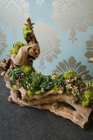Succulent design, Lilla Bello succulent design on drift wood.
