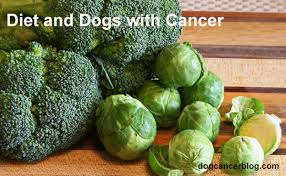 Diet And Dogs With Cancer Did My Dogs Food Cause Their
