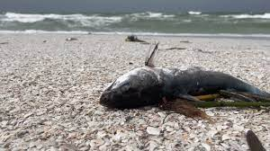 Sarasota County now cleaning up marine ...