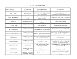 Cell Organelles Structure Function Chart An Examination Of Cell Structure And Function Custom Paper