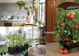 Small Picture Indoor Vegetable Garden Gardening Ideas