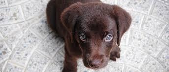 Süße hunde welpen hundewelpen tiere hund aussie welpen supersüßer welpe niedliche welpen hunde fotos hunde rassen süßeste haustiere. Die 22 Sussesten Hunderassen Der Welt Mit Bildern Edogs