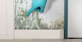 mold in house causes signs health