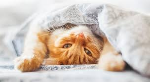 how to stop your cat on bed covers and pillows