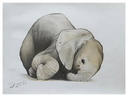 baby elephant drawings. Simple Elephant Baby Elephant Drawing  Realistic Color Pencil Sketch By  Sketches In Intended Drawings P