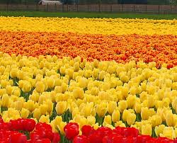 flowers garden. Garden Of One Flower Flowers