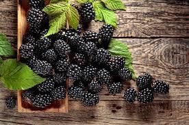 ブラック ベリー 栄養