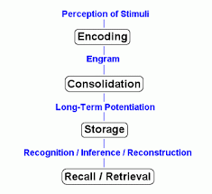 Memory Processes Types Of Memory In Psychology