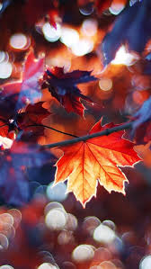 fall wallpaper iphone 5. Plain Iphone Autumn Leaves IPhone 5s Wallpaper Download  Wallpapers IPad  Wallpapers Onestop On Fall Iphone 5 O