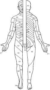 Dermatome Chart Minars Dermatology