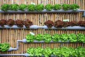 Small Picture 5 Creative Vegetable Garden Ideas