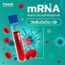 mRNA คืออะไร ? สำคัญอย่างไรต่อ 🌡... - Touch Good Health