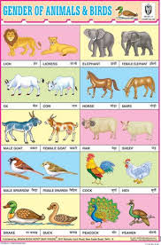 Animals Charts Indian Book Depot Map House Learn Hindi