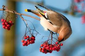 Znalezione obrazy dla zapytania jesienne ptaki