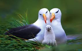 birds wallpaper. Brilliant Birds You Can Download Birds Wildlife HD Background From Animals Category  For Free This Wallpaper Is Available In The Formats See Below Pc  Intended Birds Wallpaper L