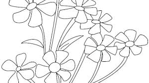 Tropical Flower Coloring Pages Cal Flowers Free Small Sheet Es