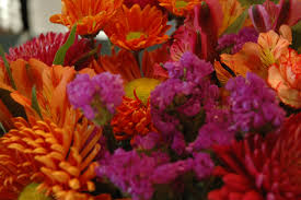 Fall Flower Backgrounds posted by ...