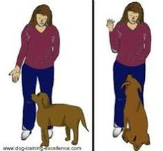 11 Best Dog Training Hand Signals Images Dog Training