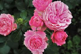 Ojol musik 3 months ago download. 7 Bunga Yang Memakai Nama Dari Anggota Keluarga Kerajaan Inggris