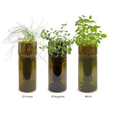 Herb Kitchen Garden Kit Similiar Indoor Herbs Keywords