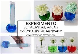 Experimento Con Plantas Agua Y Colorante Alimentario Colorante