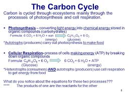 6 the carbon cycle carbon is cycled through ecosystems mainly through the processes of photosynthesis and