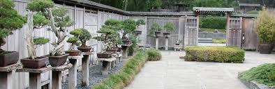 bonsai gardens. bonsai collection gardens t