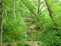 stream surrounded by plants and trees with arched bridge in the background picturesque bridge at the botanical gardens at asheville