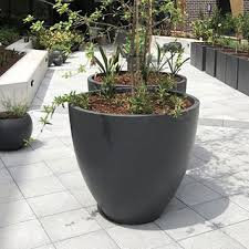 large potted trees for