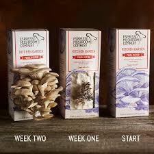 Kitchen Garden Kit Pearl Oyster Grow Your Own Mushroom Kit By Espresso Mushroom