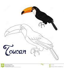 S Coloriage Oiseau Toucanlll