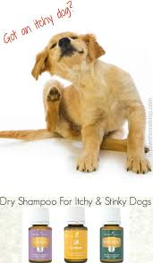 dry shampoo for itchy stinky dogs my own home