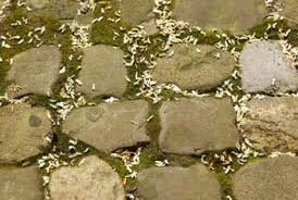 Modern Flagstone Patio Moss Can Fill In The Gaps Between Flagstones And Design Inspiration