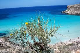 A Lampedusa Arrivano 120 Tour Operator Giornale Di Sicilia