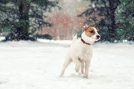 Grooming Your <b>Dog</b> Doesn't Stop In <b>Winter</b> | Pride Veterinary Centre