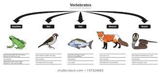 Bird Taxonomy Chart
