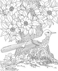 Tropical Bird Coloring Pages Free With Parrot Book Adult Stock