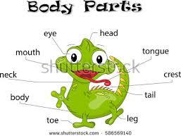 Parts Of A Frog Frog Parts Under Fontanacountryinn Com
