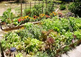 Kitchen Garden Companion Raised Bed Gardening Wikipedia