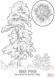 Small Picture Minnesota State Tree coloring page Free Printable Coloring Pages