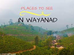 Places to Visit in Wayanad - Things to do!