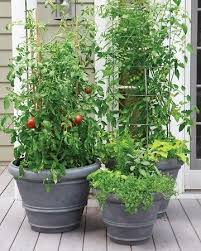 Container Gardening Tomatoes And Herbs  Home Outdoor DecorationContainer Garden Plans Tomatoes