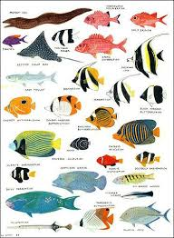 Australian Reef Fish Species Chart Angelfish Damselfish And Other Colorful Reef Fish Facts