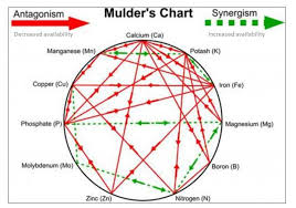 Mulders Chart Mulders Chart And Soil Nutrient Interaction Thcfarmer