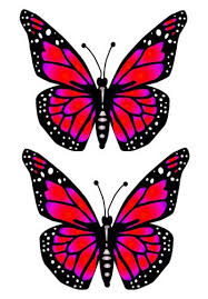 big pictures of butterflies. Delighful Butterflies Big Butterfly Red Preview To Pictures Of Butterflies W